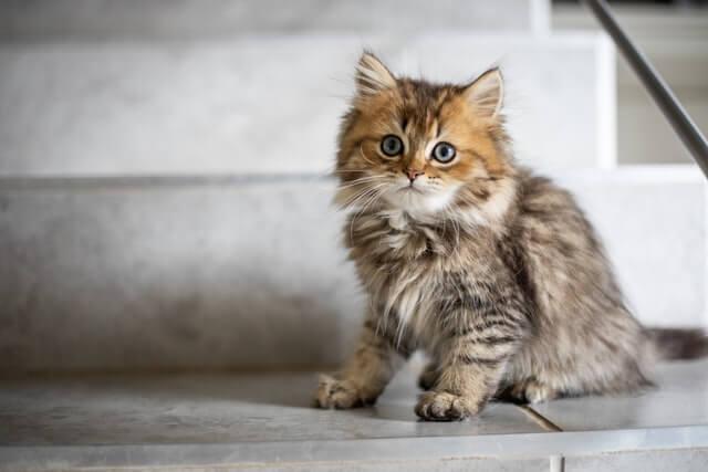階段に座る子猫